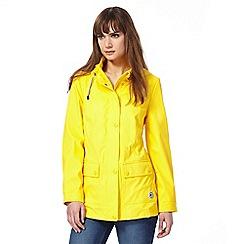 Maine New England - Yellow jacket