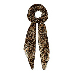 Star by Julien Macdonald - Black leopard print scarf