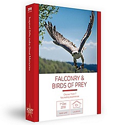 Activity Superstore - Falconry and Birds of Prey gift experience