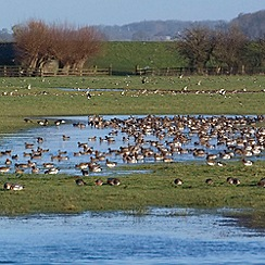 Gift Experiences - Wildfowl & Wetlands Trust Membership for Two