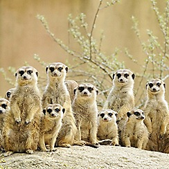 Gift Experiences - Meerkat Encounter for Two