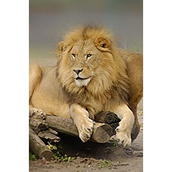 Gift Experiences - Meet the Big Cats with Afternoon Tea