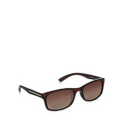 Maine New England - Small plastic D-frame bronze sunglasses