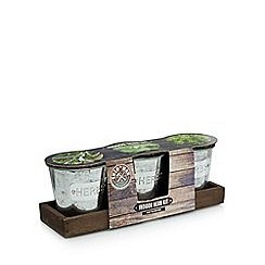 Shed Man - Indoor Herb Kit