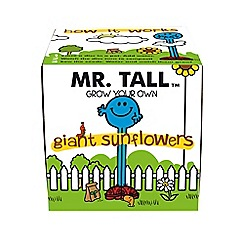 Gift Republic - Mr Tall Giant Sunflowers