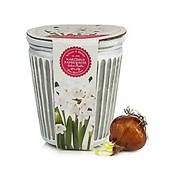 Wilson and Bloom - White plant and clay plant pot