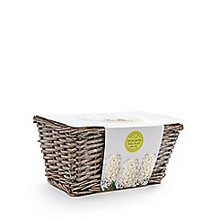 Wilson and Bloom - Hyacinth indoor basket