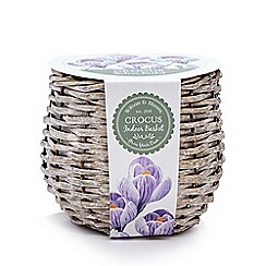 Wilson and Bloom - Crocus indoor basket