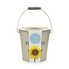 Wilson and Bloom - Grow Your Own sunflower 'Topolino' planter
