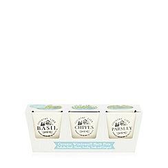 Debenhams - Cream ceramic windowsill herb pots