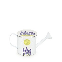 Debenhams - Grow your own Muscari watering can planter