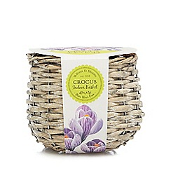 Wilson and Bloom - Crocus indoor wicker planter