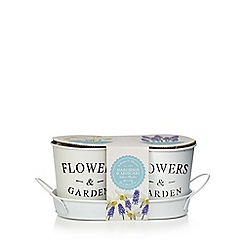 Wilson and Bloom - Narcissus and muscari indoor plant set