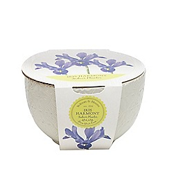 Wilson and Bloom - Ceramic iris harmony bowl planter