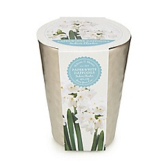 Wilson and Bloom - Paper white daffodils with a textured pot