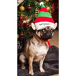 Spot & Mog - Novelty dog elf hat dress up