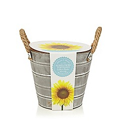 Wilson and Bloom - Sunflower Kit in a Plant Pot