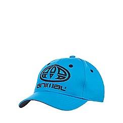 Animal - Blue logo applique baseball cap