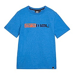 Animal - Boys' blue logo print t-shirt