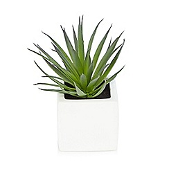 Debenhams - Green artificial succulent plant in a pot