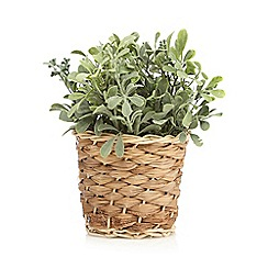 Debenhams - Green artificial plant in a basket