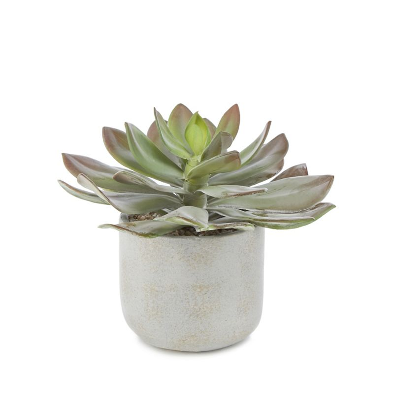 Abigail Ahern/EDITION - Artificial Echeveria In A Ceramic Pot
