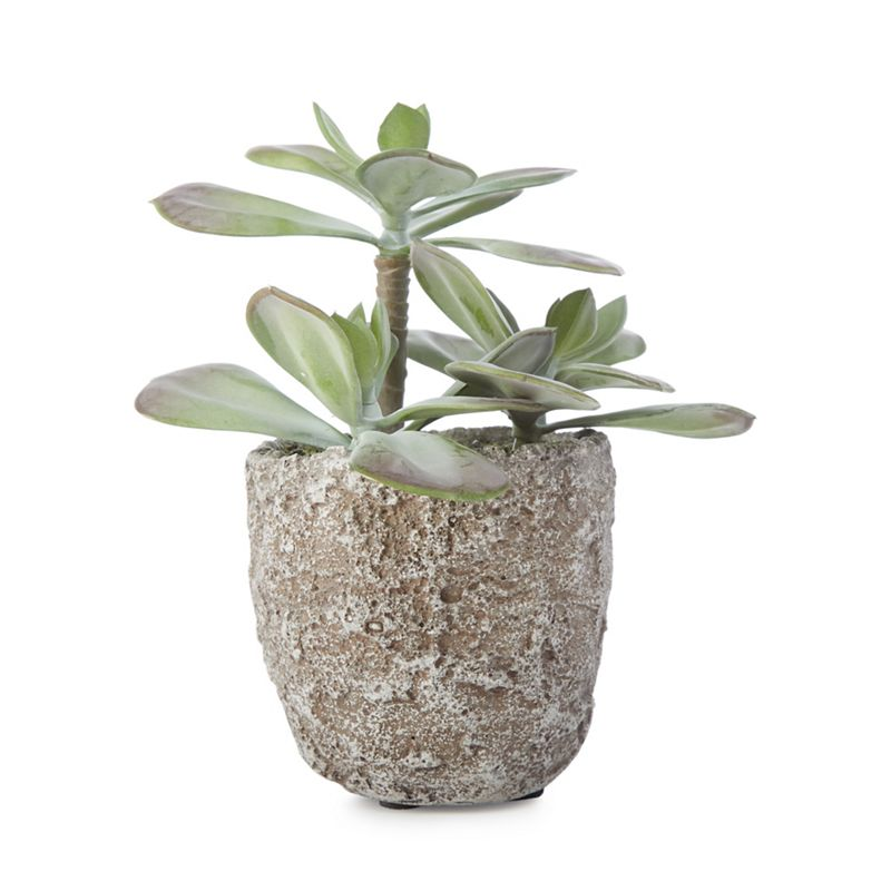 Abigail Ahern/EDITION - Artificial Echeveria Plant In A Concrete Pot