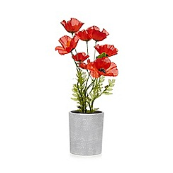Debenhams - Artificial poppies in a vase
