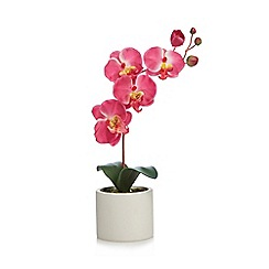 Debenhams - Artificial orchids in a ceramic pot
