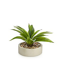 Debenhams - Artificial aloe vera plant in a ceramic pot
