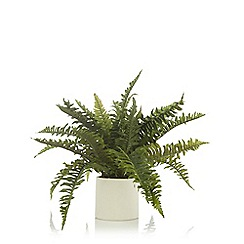 Home Collection - Ceramic pot of artificial ferns