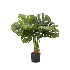 Home Collection - Artificial cheese plant