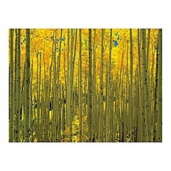 Innova - Aspens in White River Park Colorado glass art