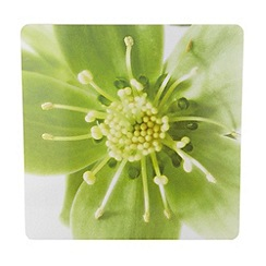 Debenhams - Set of four green hellebore placemats
