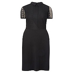 Dorothy Perkins - Dp curve black lace collared fit and flare dress