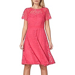 Dorothy Perkins - Pink scallop lace midi dress