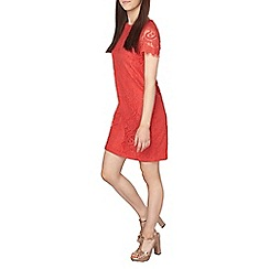 Dorothy Perkins - Petite red lace shift dress