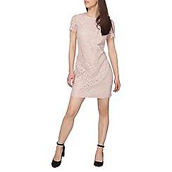 Dorothy Perkins - Petite blush lace shift dress