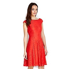 Wallis - Petite orange lace fit and flare dress