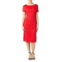Precis - Petite jassie lace dress