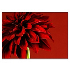 Graham & Brown - Printed canvas Red Dhalia wall art