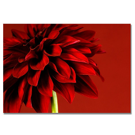 Graham & Brown - Printed canvas Red Dhalia wall art