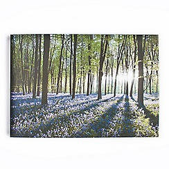 Graham & Brown - Printed canvas Bluebell landscape wall art