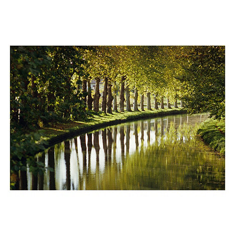 Graham & Brown - Printed canvas Tree walk wall art