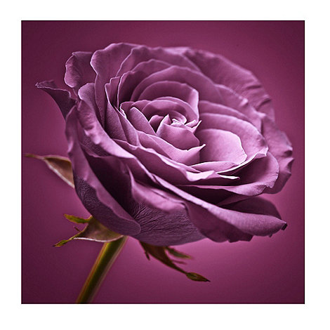 Graham & Brown - Plum Rose Wall Art