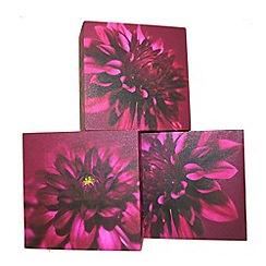Graham & Brown - Purple Dahlia Trio Box Art