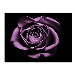 Graham & Brown - Purple Drama Rose Wall Art