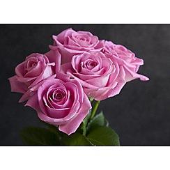 Graham & Brown - Pink roses wall art