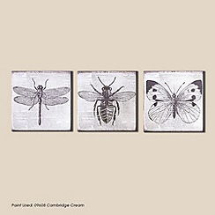 Graham & Brown - Vintage Bugs Canvas Wall art