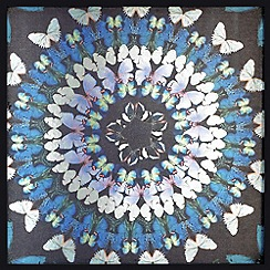 Graham & Brown - Blue Flock Of Butterflies Framed Art